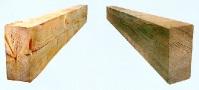 Που παρουσιάζει η φυσιολογίατου ξύλου